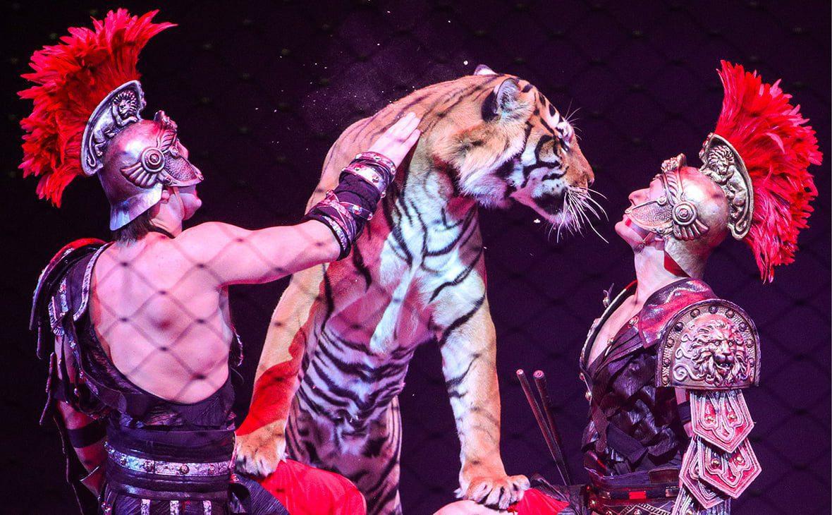 тигри під час виступу